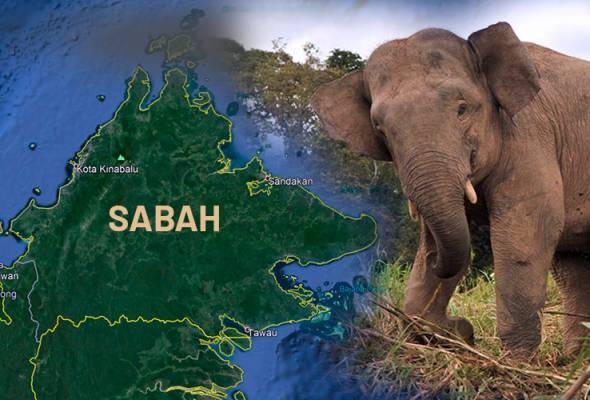Gajah jantan ditemui mati di Sukau